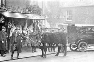 Fnb-82 Palmer,s Butchers Shop with Cow, North Walsham, Norfolk. Photo