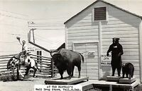 South Dakota SD Real Photo RPPC Postcard c1950 TED HUSTEAD'S Bear Cowboy BISON