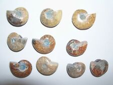 strong frig refrigerator magnet ammonite fossil. 1 holds over ten papers