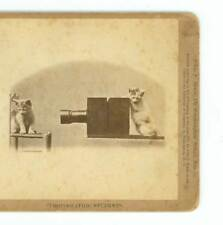 B3089 Soule Kittens 1873 Photographic Students D