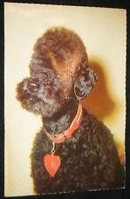 Black Alma Voice Card Squeaky Poodle Postcard Made in West German Alfred Mainzer