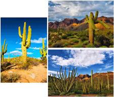 Desert Cactus - 3 3D Lenticular Postcard Greeting Cards