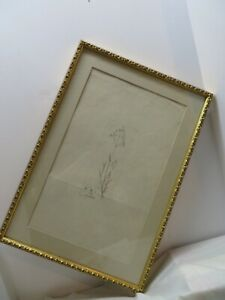 Antique Botany print Aira Caryophyllea William Curtis ? 1816 Watermark Syd Edwa