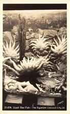 RPPC GIANT STAR FISH The Aquarium - Crescent City, CA 1953 Vintage Postcard