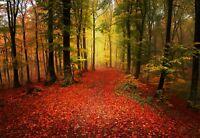 Fototapete XXL Wald Natur Herbst Baum Blätter Wohnzimmer Tapete Wandtapete 25