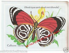 PAPILLON INSECTE BUTTERFLY CALLICORE CLYMENA maronensis ANNEE 60s