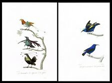 Hummingbirds Colibries, 2 Hand-Colored Plates - Oeuvres de Buffon 1835
