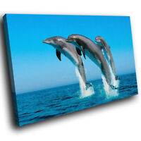 A034 Blue Dolphin Ocean Grey Funky Animal Canvas Wall Art Large Picture Prints