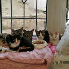 Meet the Costa cats. Please donate towards their care at Sandbach Animal Rescue