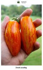 Tomate Sweet casaday - 30 semillas - Saatgut - Graines - Semi