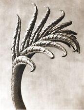 1942 FOTO ORIGINALE STAMPA ROTOCALCO PIASTRA 80. Karl Blossfeldt astratto botanico