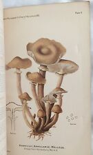 Report of The Microscopist for 1891, Color Plates of Mushrooms, Gov't Pamphlet