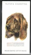 Rough Coated Otterhound Dog 75+ Y/O Ad Trade Card