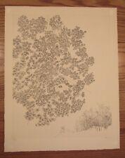 "Gabor Peterdi ?? signed print engraving tree nature scene vista 18""x23"""