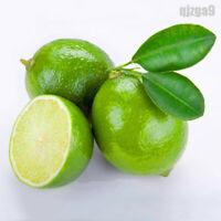 20PCS Thai Organic Key Lime Seeds Citrus Aurantifolia Lemon Seeds Fruit Seeds