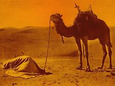 ART PRINT POSTER PHOTO VINTAGE CAMEL DESERT PRAYING BEDOUIN NOFL0567