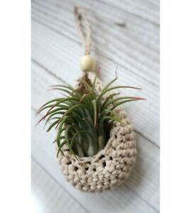 Air Plant Hanger - Free Shipping / Made to Order From Canada