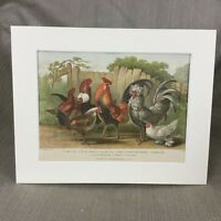 1876 Antique Victorian Print Bantam Hen Cockerel Rooster Chicken Birds
