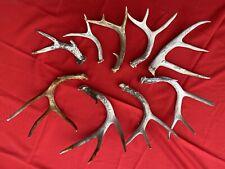 whitetail deer antler sheds, 9 Sheds, Points (4, 3 & 2) Crafts, Decorating
