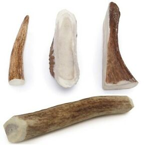 ELK ANTLER DOG DENTAL CHEWS Natural Way to Clean Your Dog's Teeth Bulk Too!