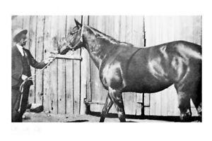 POSINATUS - 1913 Melbourne Cup winner modern Digital Photo Postcard