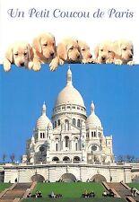BF38649 le petit coucou de paris  chien dog  animal animaux