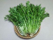200 Samen Mizuna Japanischer Blattsenf Salat Brassica rapa japonica Asia-Salat