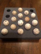12+ Gambel's Quail Hatching Eggs Gamble Gambel