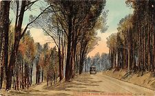 POSTCARD    SOUTH  AFRICA CAPE  TOWN  Kloof  Road  Through the Pines