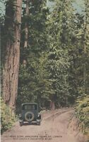 Vintage Postcard, Vancouver Island, B.C. Road Scene, CPR photo- Royalty Series