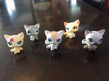 LPS Littlest Pet Shop Lot 5 Sitting Kitten Cat Siamese # 664 224 1231 1521 467