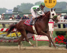 Point Given 2001 Preakness Stakes Photo 8x10