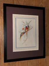 """J Gould stampa d'Epoca, GOULD Incorniciato Wall Art - 20"""" x16"""" CORNICE, Uccello Esotico ARTE"""