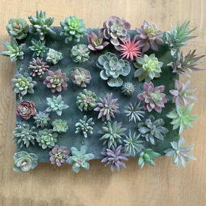 12pcs Artificial Succulent Plants Unpotted Mini Fake Succulents Plant Decor Pack