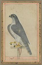 "Indian Art : ""Falcon"" (c.1770) — Giclee Fine Art Print"