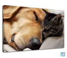 Big Dog Sleeping With A Baby Cat For Drawing Room Canvas Wall Art Picture Print
