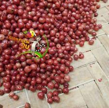 Pink Peppercorns Madagascar. 2.2LB/1KG  Ship Free DHL From Madagascar.Free Gift.