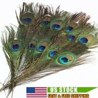 50/100Pcs Peacock Tail Feathers Natural For Bouquet DIY Decoration 10-12inch US