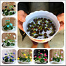 Lotus Flower Bonsai SUMMER Lotus Seeds Bonsai Pots And Garden Plants 5 PCS Seeds