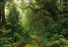 "100"" x 145"" Jungle forest trees footpath landscape Wall Murals Wallpaper WM4211"