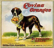 Covina Los Angeles Saint Bernard Dog Orange Citrus Fruit Crate Label Art Print