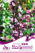 Original Packaging Common Hyssop Seed 50 Seeds HysSopus Herb Plant Seeds D029