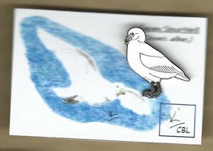 Limited edition Snowy Sheathbill with card - CBL bird pin badge