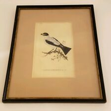 Antique Framed 1823 Victorian Bird Hand Colored Lithograph - London E. Donovan