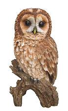 Vivid Arts-Aves-Tawny con dibujo de búho de la vida real