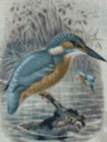 """Kingfisher 2 Complete Counted Cross Stitch Kit 8""""x10.5"""" 14 Count"""