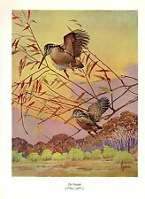 """1957 Vintage FRANCIS LEE JAQUES """"WOODCOCK"""" LOVELY Color Art HUNTING Lithograph"""