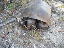 Tortoise Dried Weeds/Flowers 15 Individual Packs FOOD