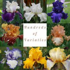 Lot 25 Tall Bearded Iris Rhizomes Bulbs Plants All Different Colors