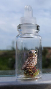 Hand made Tiny miniature Little owl in a glass jar bottle necklace pendant